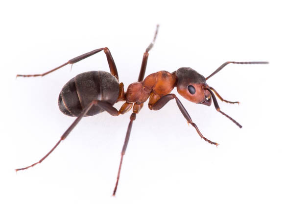 insect pest control in kent