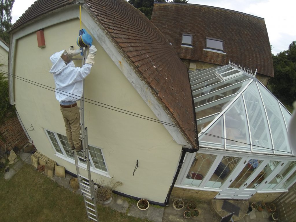 Wasp Nest Removal Service